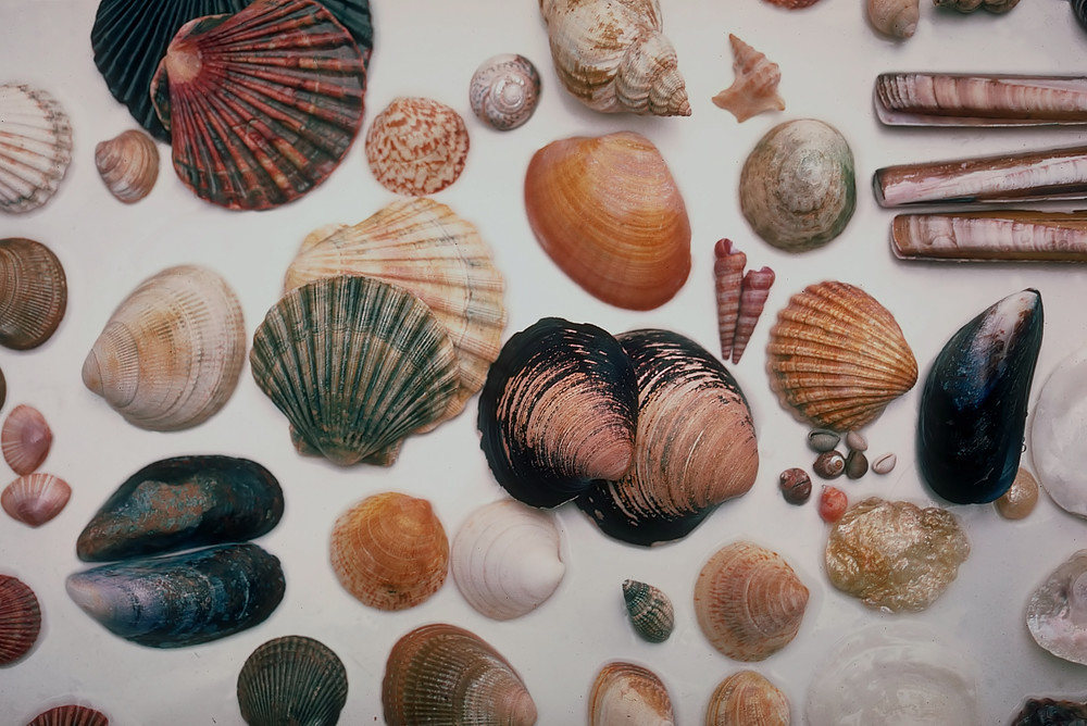 Sea shells in many forms