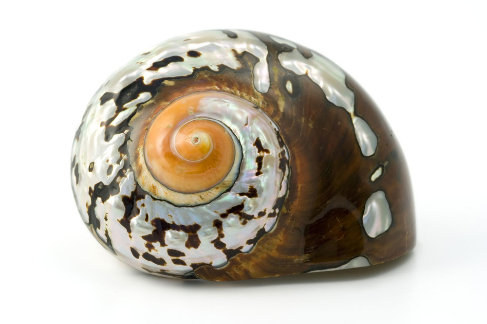 Spiral shaped shell for increased strength