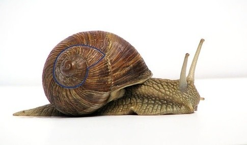 Shell formation after growth